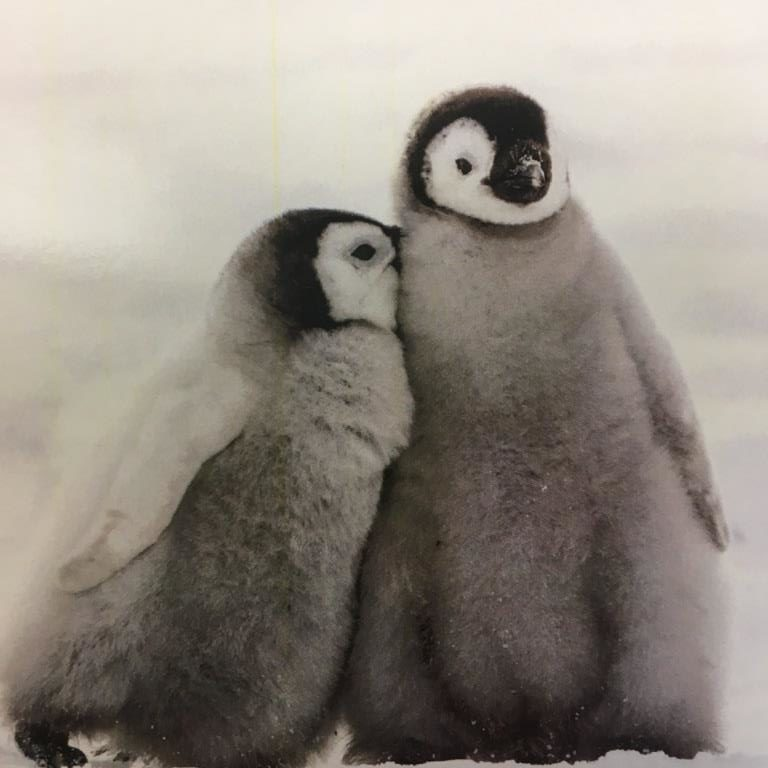Let's Have A Cuddle (Penguins) – Cards (Pack of 10)